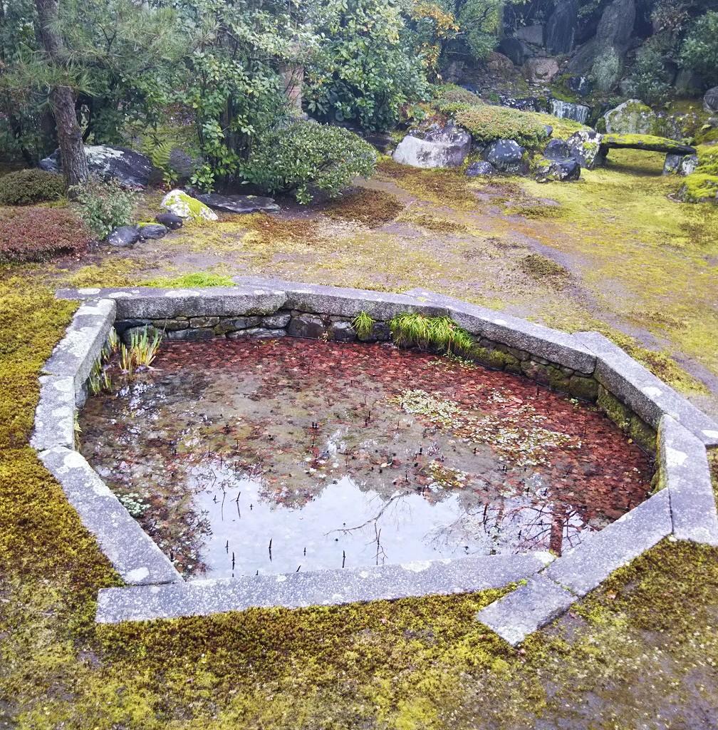 巴の庭.jpg