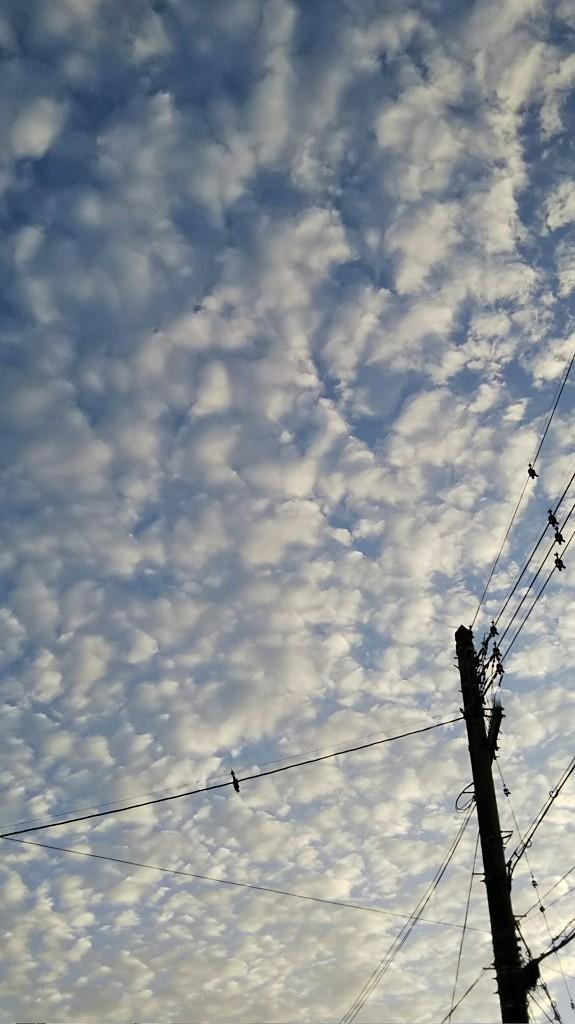 2018いわし雲.jpg